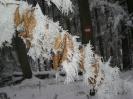 Winterbilder 2007